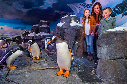 Johnny Morris' Penguin Encounter