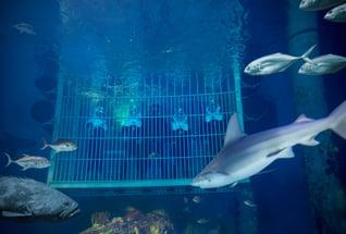 _E5A3480_Sea Trek - Wonders of Wildlife National Museum & Aquarium